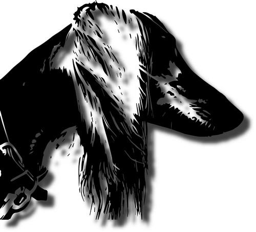 pet portrait drawing, dog, cat pictures