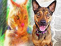Custom Pet Portrait Paintings