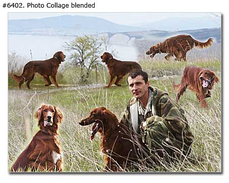 Pet photo collage
