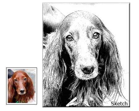 Pet portrait pencil sketch drawing from photo, commissioned portrait 12x18 online order