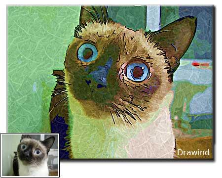 Custom cat portrait drawing, pet photo painting
