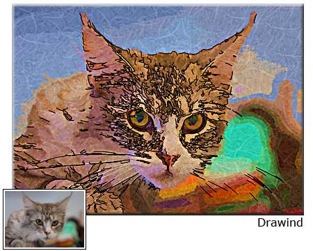 Personalized cat photo to portrait drawing