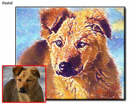 Pastel painting Pet Portrait