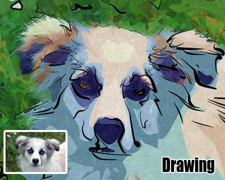 Customized drawing of dog portrait