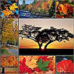 Landscape-Nature Photo Collage - 8 photos