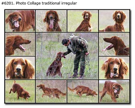 Pet photo collage traditional irregular from 13 dog photos