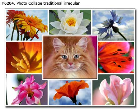 Cat photo collage traditional irregular