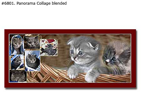 Panoramic pet collage traditional irregular