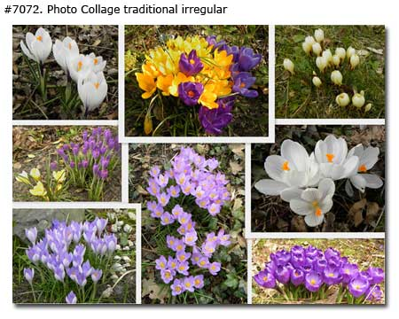 Beautiful Spring Flowers Collage traditional