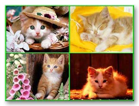 Pets Poster Design Pet 4010